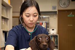 前野動物ケアーセンター 獣医
